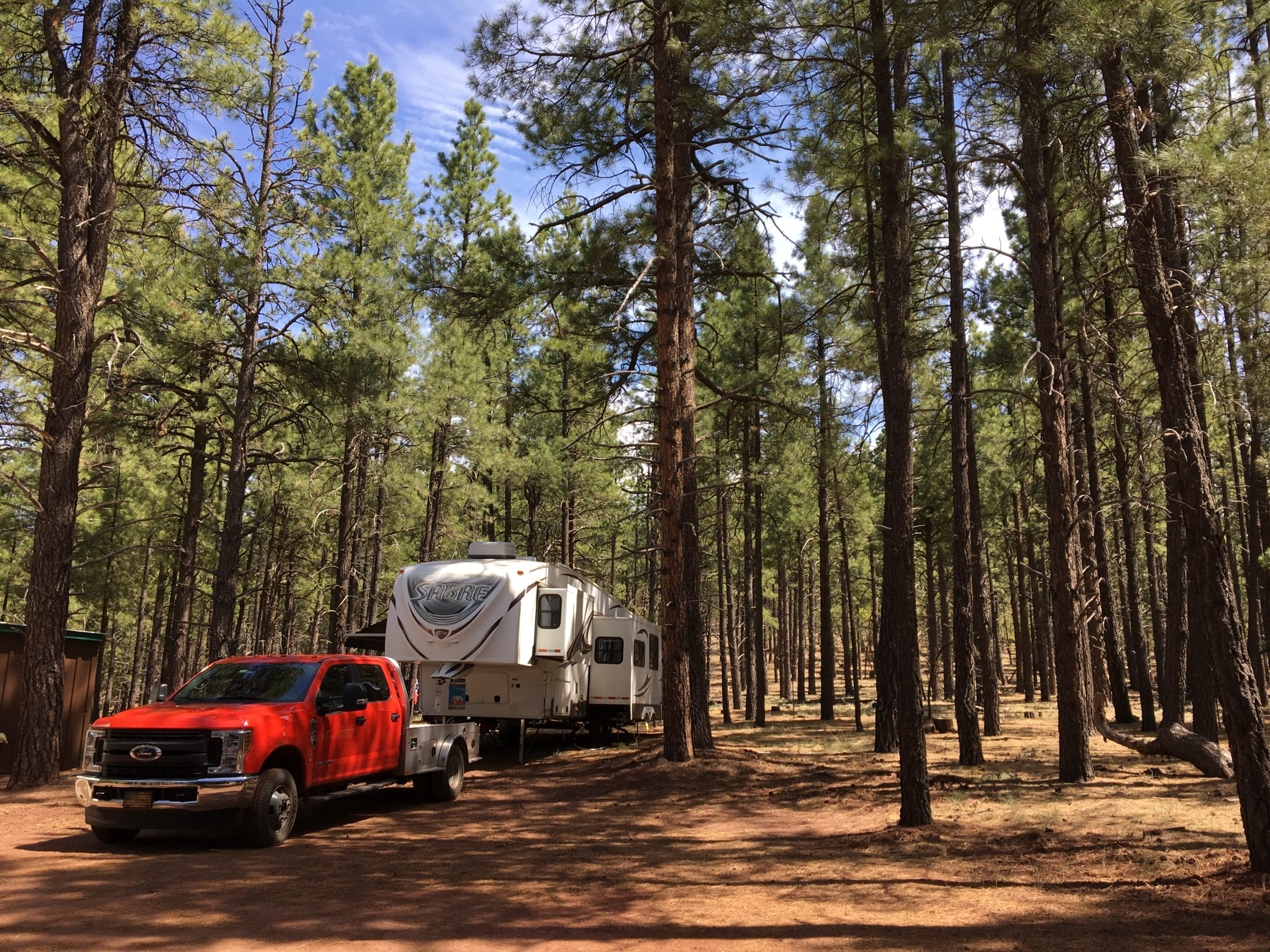 In the Pines at the West Branch of the Bill Rice Ranch